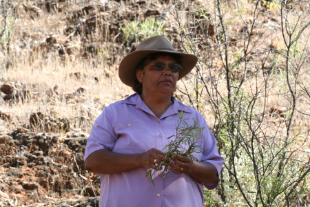Josie Coulthard collecting bush medicine
